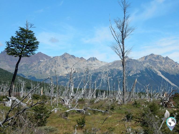 Bäume Laguna Esmeralda