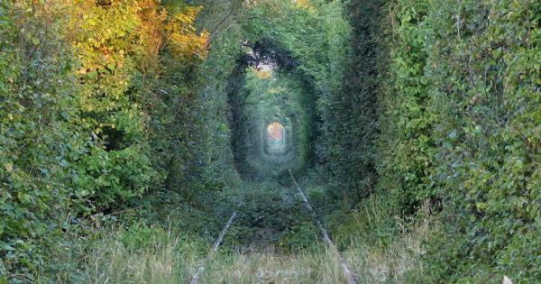 Erste Sonnenstrahlen im Tunnel of Love in Obreja, Rumänien